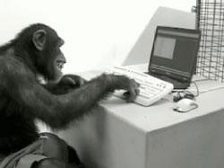 monkey-on-computer[1]