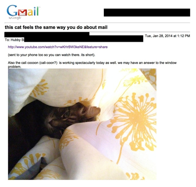 Gmail - this cat feels the same way you do about mail